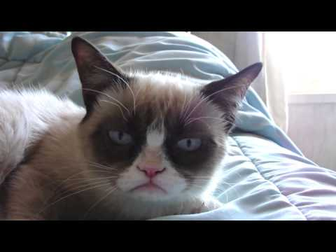 Sleepy Grumpy Cat