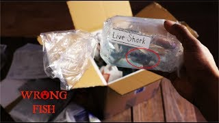 They Mistakenly Sent Me Monster Fish...Live Fish Unboxing