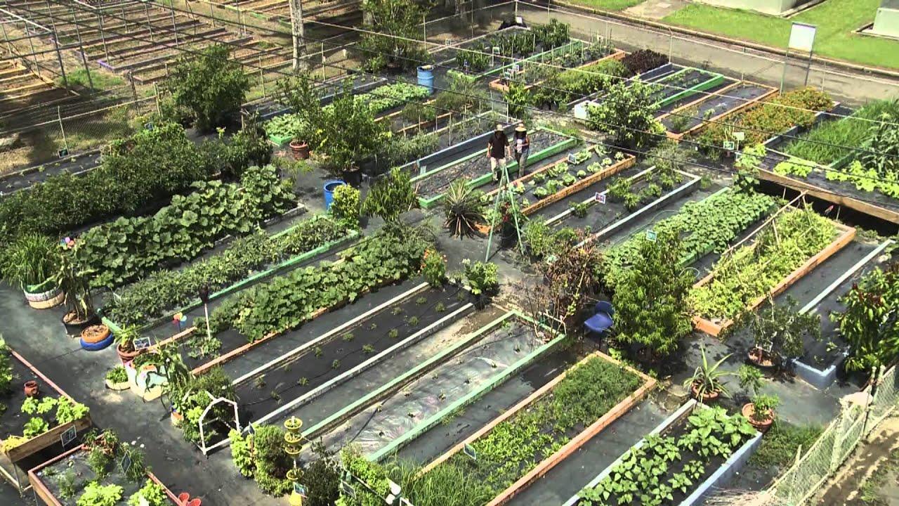 Geoambiente huertos urbanos 1 3 youtube - Huerto urbano malaga ...