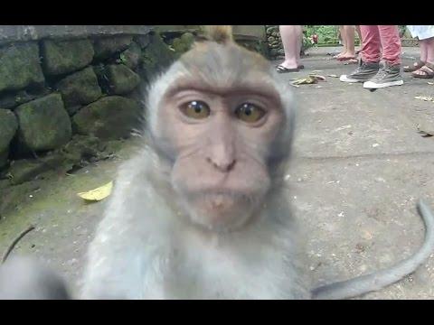Смешное видео про животных. Подборка 2014 - 2015