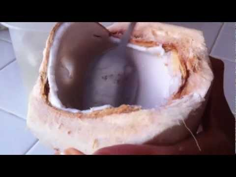 Coconut Water as a Gatorade Replacement (FOOD BITE)