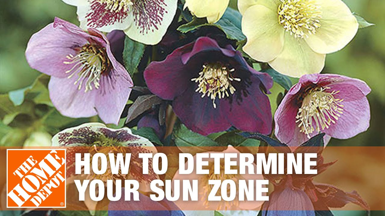 How to determine your sun zone and plant a shade garden for Shade garden designs zone 6