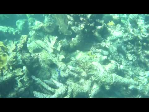 St Croix - Buck Island Reef National Monument snorkel trip