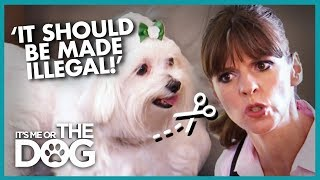 Owner Wants To 'Debark' Her Noisy Dog | It's Me or The Dog