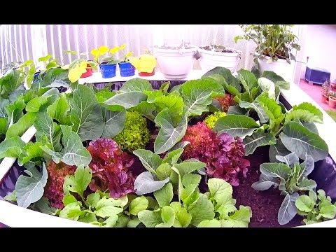 Maifreuden: Salat, Zucchini,Tomaten, Kohlrabi (Gewächshaus & Hochbeet Perfekt! Film 8)