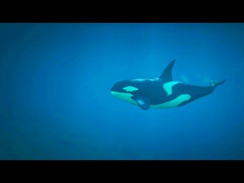 GTA 5 Funny Moments - Animals Edition