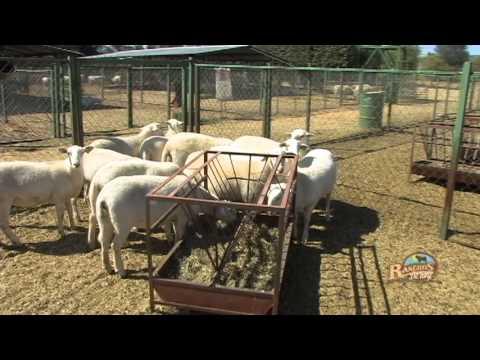 Trailer Rancho AyJ Borregos Katahdin