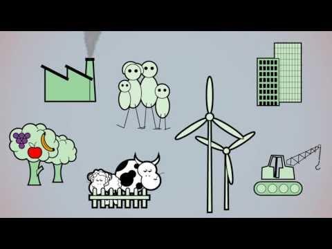 Come funziona l'economia reale? I saldi settoriali -  filmato integrale 13 min - video didattico