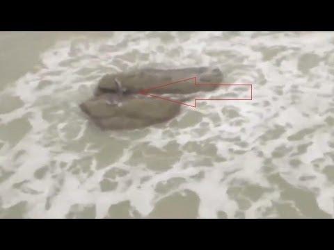 ikan duyung terdampar - photo #7