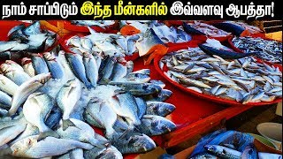 About 8 Fishes That Are Too Dangerous To Eat