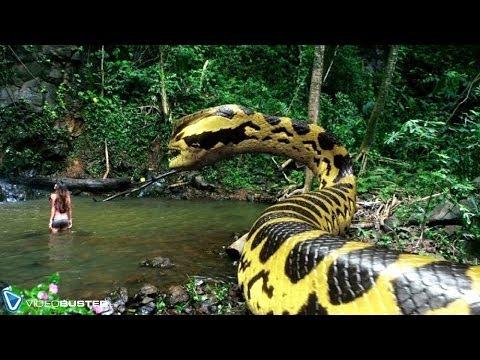 VIDEOBUSTER.de zeigt PIRANHACONDA - Anaconda und Piranha! deutscher Trailer HD zur DVD & Blu-ray thumbnail