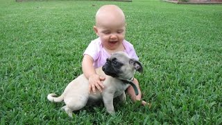 Funny Pug and Baby Video Compilation 2015