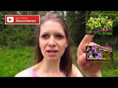 Heilpflanze - Der Wacholder - Bavaria Botanika