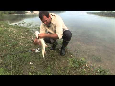 рыбалка на дунае в болгарии форум