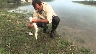 видео ловля жереха в казахстане