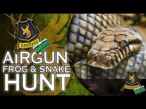 Airgun Frog & Snake Hunt in Alabama