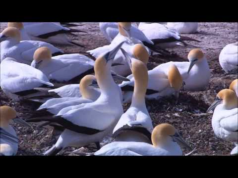 Wild Life Nature HD 1080P Wide Screen 3D Available Full HD