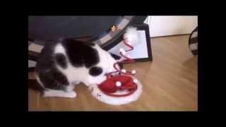 """download lagu Katze Sanny Spielt Mit Der """" Weihnachtsmannmütze """" Und gratis"""