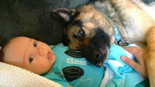 German Shepherd and Baby Playing Compilation