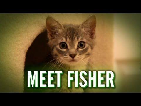 Meet Fisher
