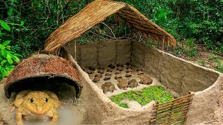How To Build Bullfrog Hut And Feeding Giant Frogs In Coconut Shell