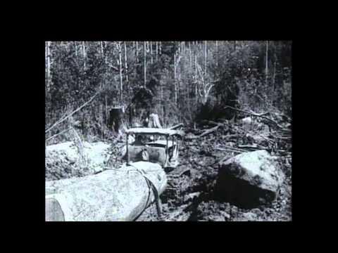 Ťažba dreva v Tasmánii