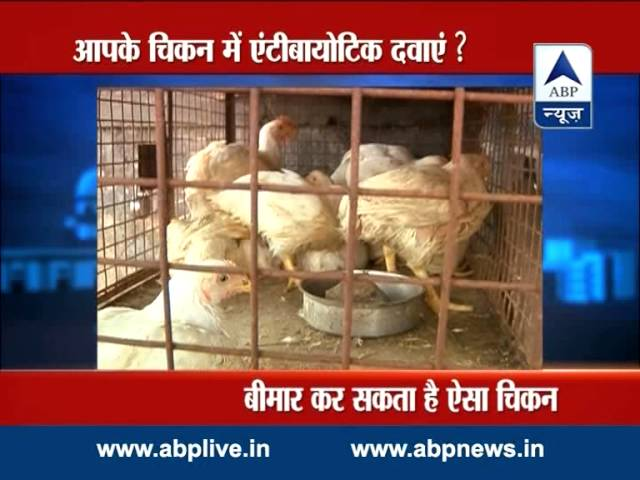 ABP LIVE: Study finds antibiotic residues in poultry