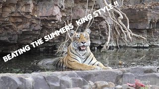 Ranthambore Tiger Sighting : Musical Jungle and Pool