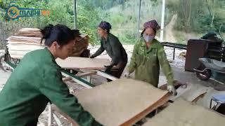Máy bóc gỗ điện tử MAB52 chạy thực tế tại xưởng khách hàng | Machi - Máy ngành gỗ