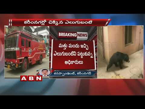 Forest Department Team Grabbed The Bear In Karimnagar | ABN Telugu