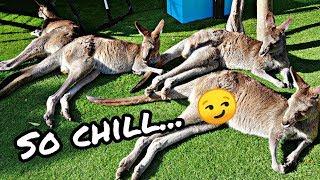 Visiting Wellington Zoo   New Zealand Travel Vlog