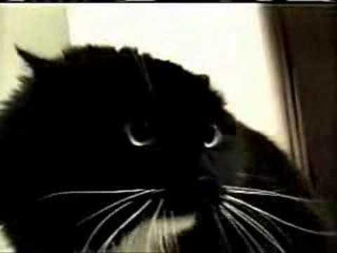 Beszélő macskák