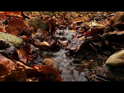 Calming Autumn Forest Stream. Relaxing Water Sounds. (10 hours) White Noise for sleep.