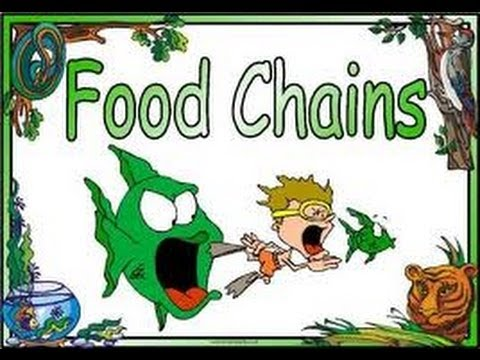 Food Chains ,food Webs,energy Pyramid In Ecosystems-video For Kids video