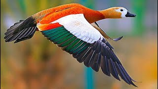 Top Most Beautiful Birds of the World. Its Amazing!