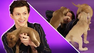 Download Lagu Tom Holland Plays With Puppies While Answering Fan Questions Gratis STAFABAND