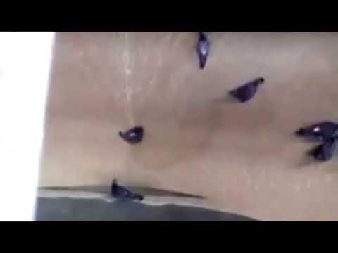 좁쌀 먹으려다가 분쇄기에 빠지는 비둘기들
