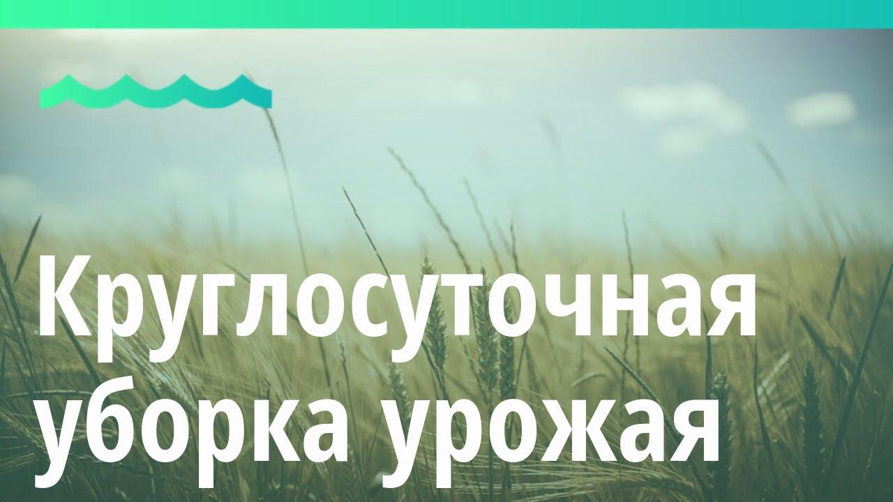 Алтайские аграрии круглосуточно убирают урожай с полей