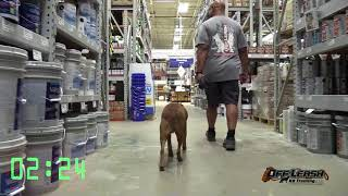 """1 Year Old Mutt """"Charlie"""" Before/After Video    Dog Trainers Columbus GA"""