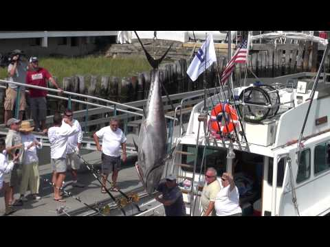 BlueFin Blowout Gloucester MA AUG 2012, Winning tuna 582 Pounds! 2013 Buefin blowout winner?