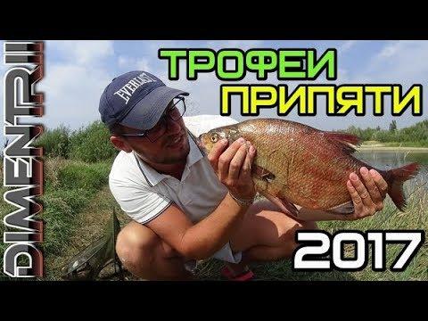 видео трофейный лещ
