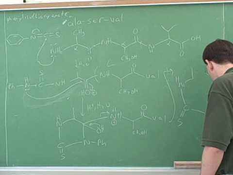 Amino acid and polypeptide synthesis (8)