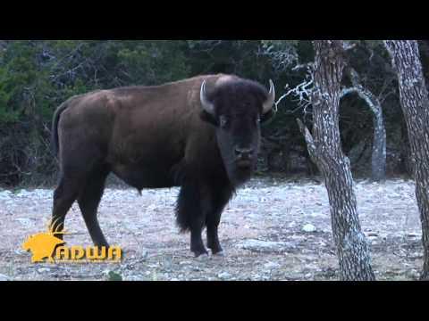 A Pioneering Program | Deer & Wildlife Stories
