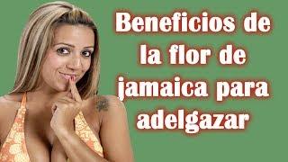 Beneficios de la flor de jamaica para adelgazar