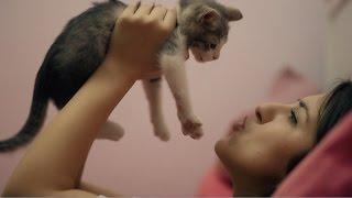 Sadece Yeni Kedi Sahiplenen İnsanlarda Gördüğümüz Davranışlar