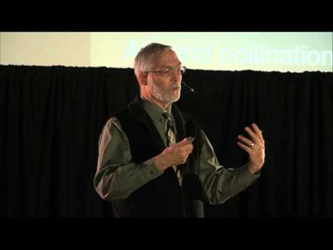Honey bees -- the canary in the coal mine: Gard Otis at TEDxGuelphU