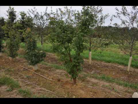 Landscaping Tips  Fertilization of Evergreen and small shrubs