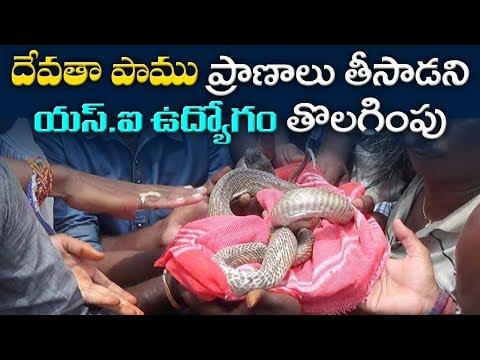 దేవతా పాము ప్రాణాలు తీసాడని యస్.ఐ వుద్యోగం తొలగింపు | SI Lost Job because of Snake