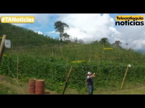 Embajadores de países ante la FAO visitaron un cultivo de fríjol en  Santo Domingo