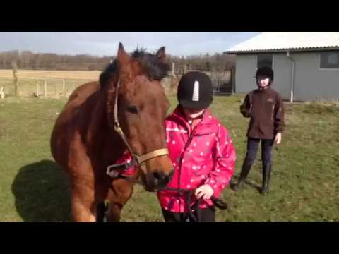 Girl In Trouble With Horse video